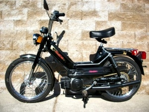 Black_Puch001